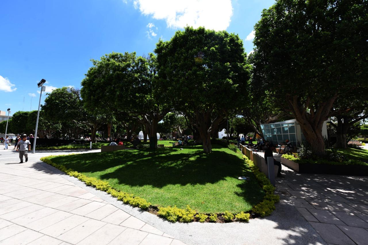 Realizarán inventario de árboles en el Centro Histórico