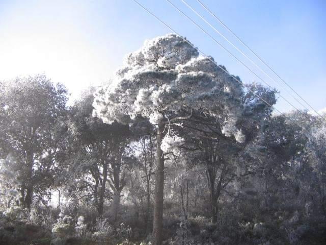 Se viste de blanco Guanajuato con nieve; temperaturas llegan a 0 grados