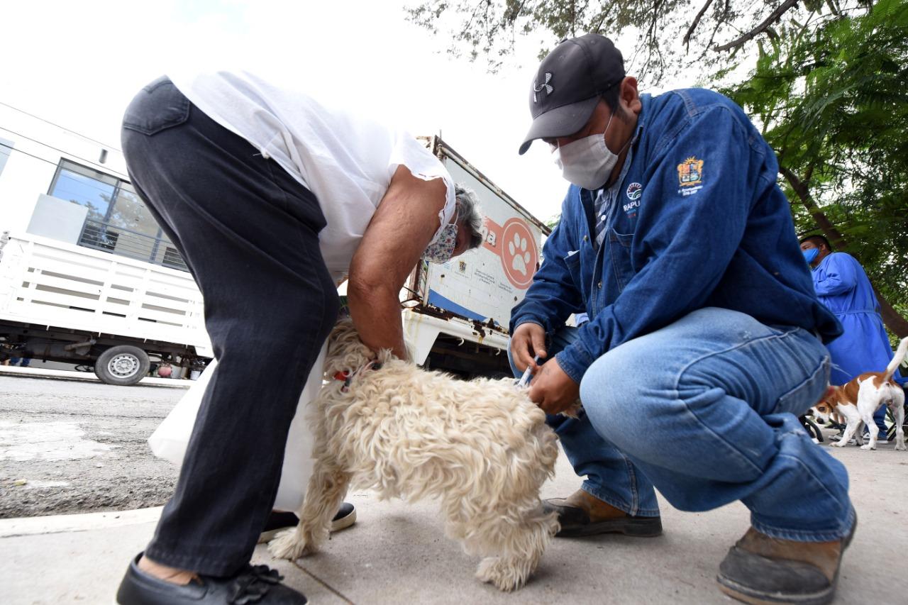 Continúa campaña de vacunación de mascotas en Irapuato