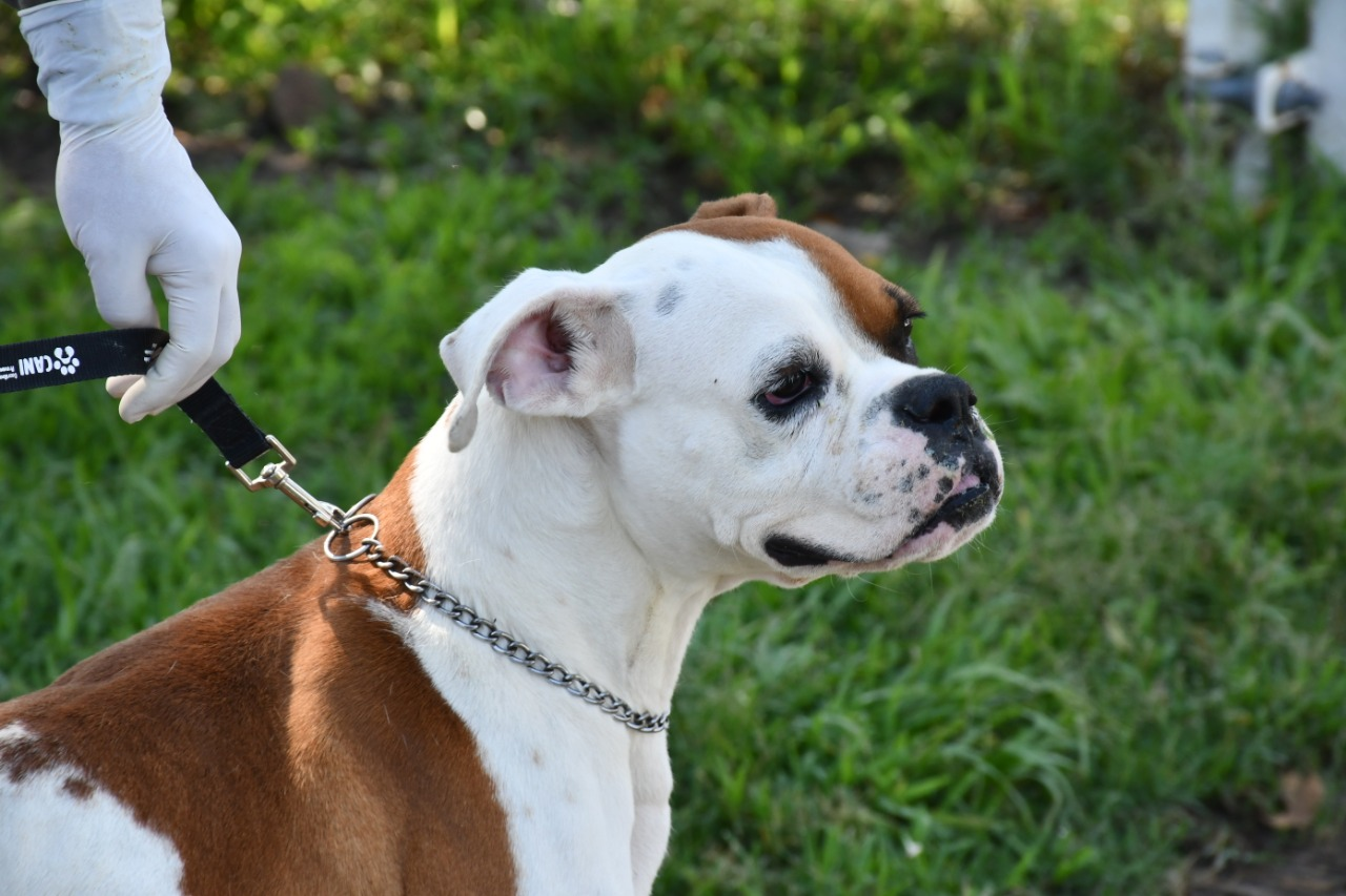 Éste lunes 5 de octubre inicia semana de esterilización de mascotas