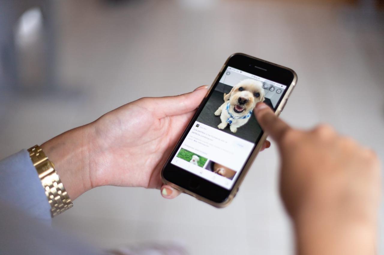 Lanzará Lorena Alfaro app para denunciar maltrato animal